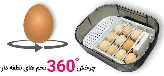 چرخش 360 درجه تخم های نطفه دار